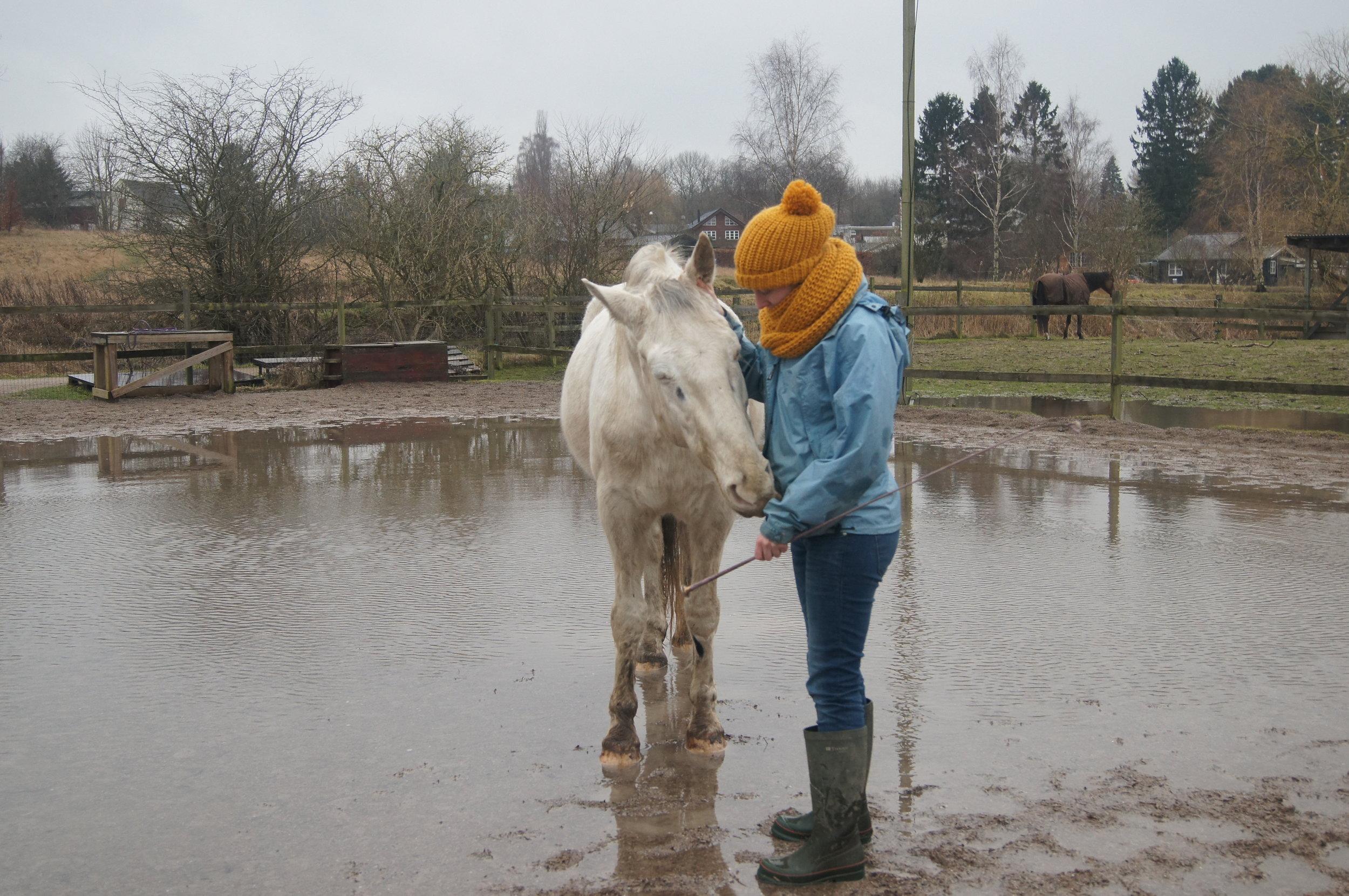 Vigtige pointer - Gå LANGSOMT fremHvis hesten reagerer voldsomt, var trinnet for stort - del det op i mindre bidderHvis du fjerner påvirkningen før hesten er rolig vil den ikke have fået det rigtige udbytte af trinnet (fx at være tryg ved underlaget)Fasthold ikke en for svær påvirkning, det kan øge hestens følsomhed overfor påvirkningen
