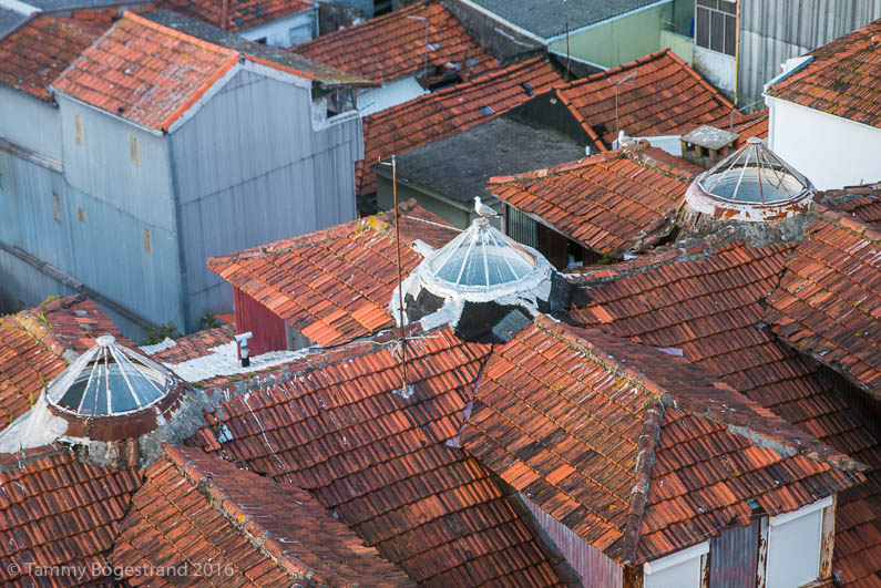 Roof-top-view-of-roof-tops_Porto_20160428.jpg