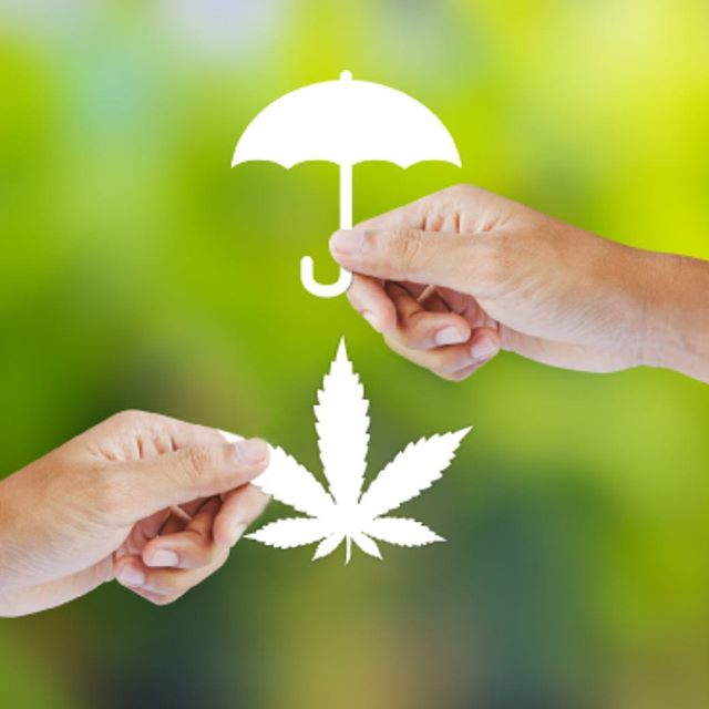 Is your Cannabis Business Covered? Contact us today to get a FREE quote on your business Insurance needs! #protectyourgreen #womenincannabis #cannabiscommunity #cannabis #marijuana #insurance #protection #crop #grow #cbd #thc #mjbizcon #business #kush #green #medicalmarijuana