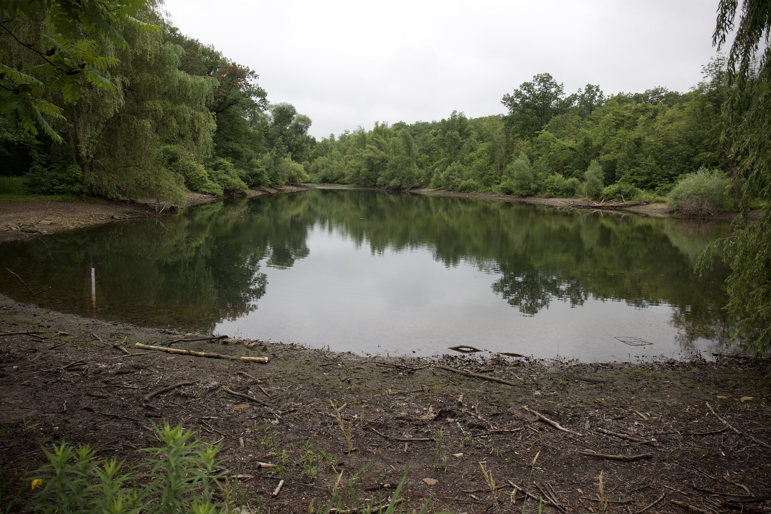 Drawdown of Muskrat Pond into Second Creek