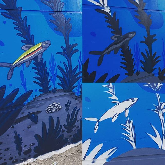 Stages of #redsidedace on the Bentway mural #loveletterstothegreatlakes #swimdrinkfish