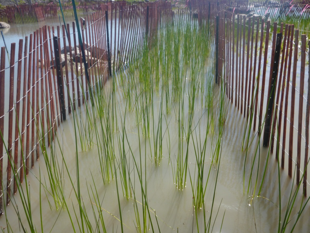 The West Family Swim Drink Fish Great Lakes Challenge - Waterfront Wetland Creation - Figure 9.jpg