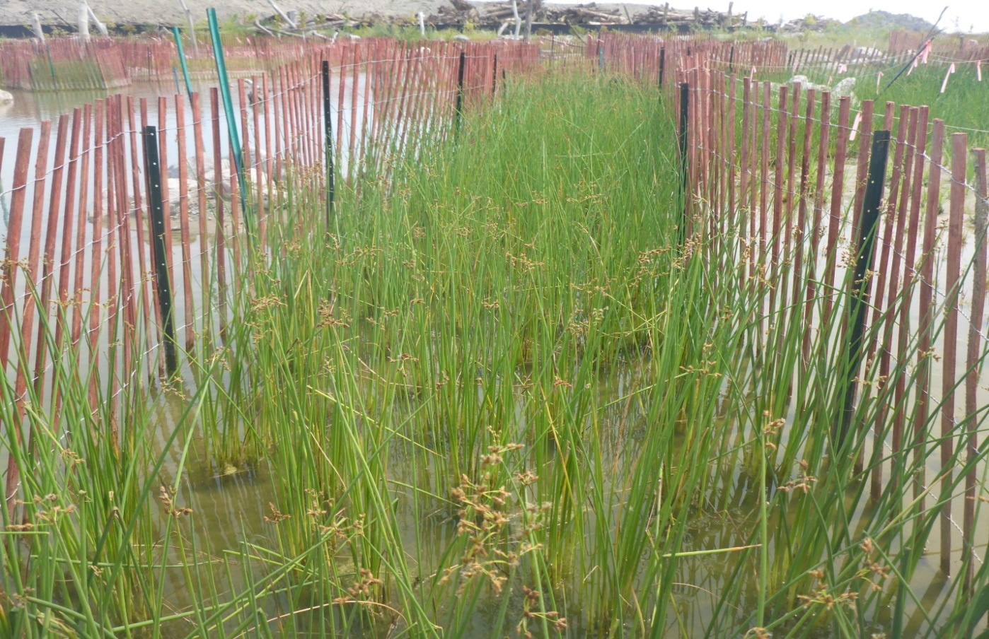 The West Family Swim Drink Fish Great Lakes Challenge - Waterfront Wetland Creation - Figure 10.jpg