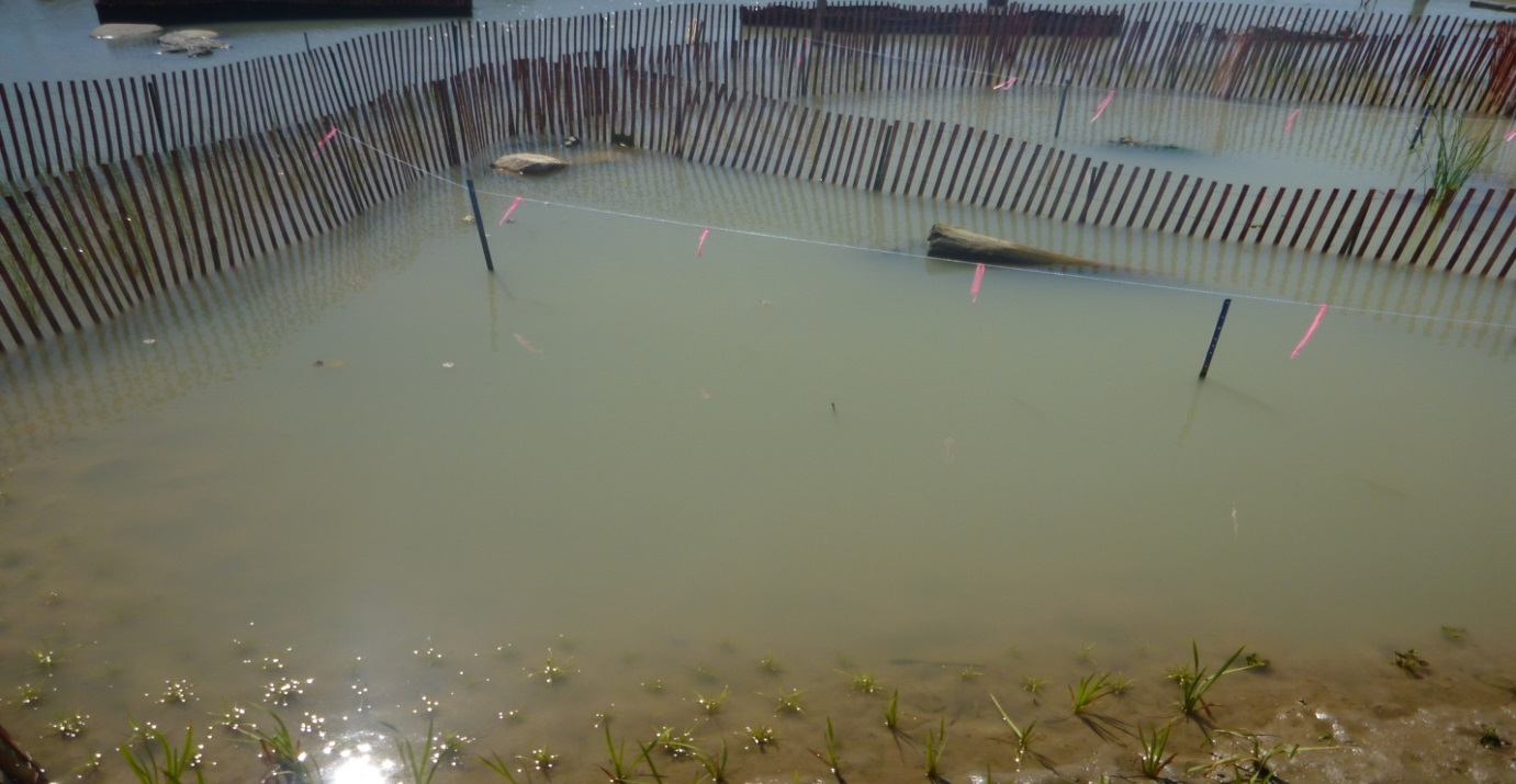 The West Family Swim Drink Fish Great Lakes Challenge - Waterfront Wetland Creation - Figure 11.jpg