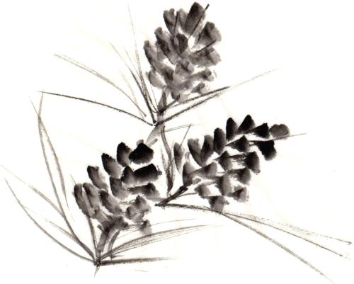 pinecones__tilted1_extralarge.jpg