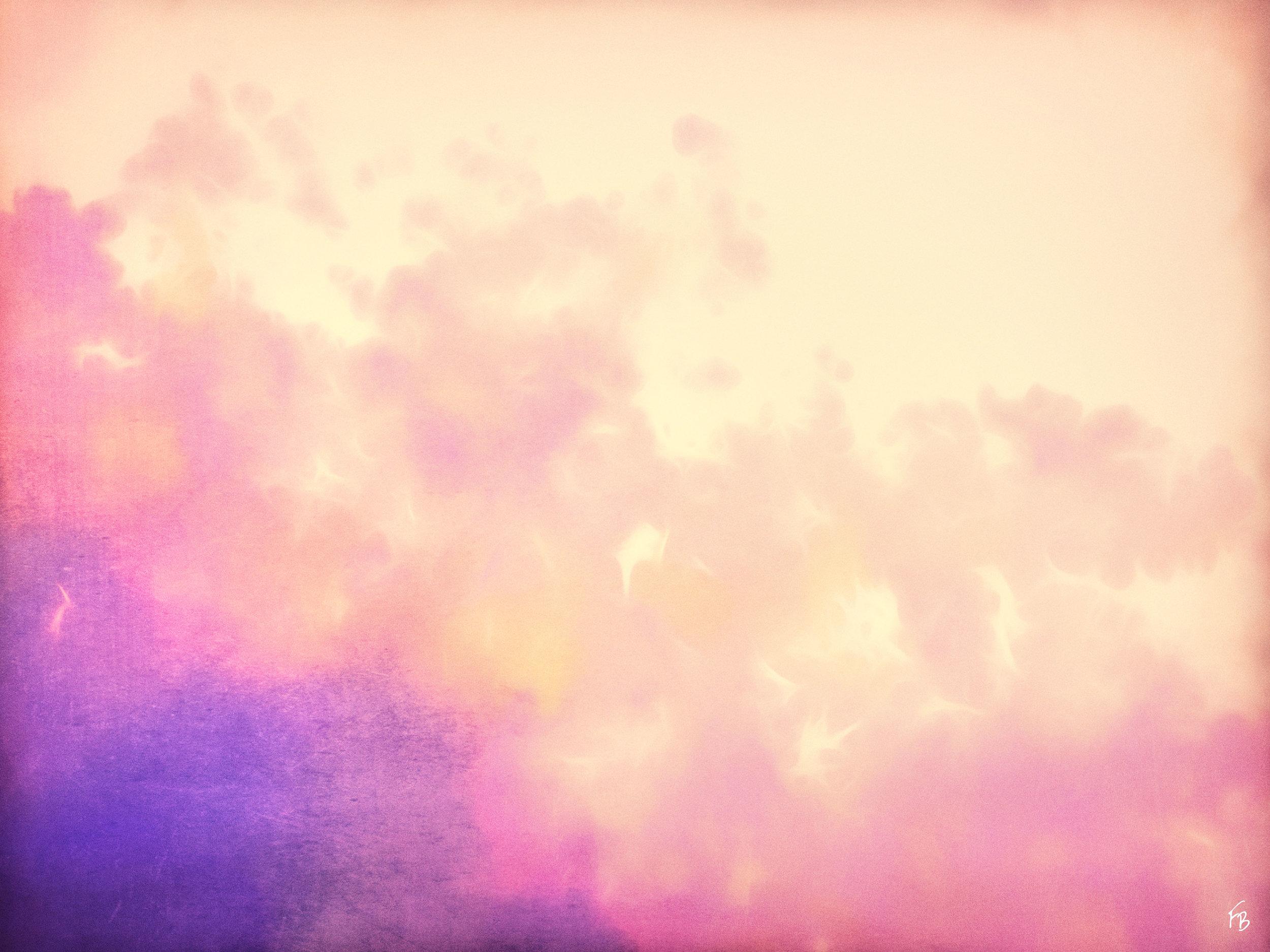 Blossom in purple