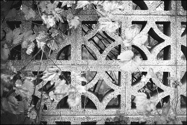i love finding beautiful details among the grime of the city. • Nikon F2 Nikkor 50mm, f/1.4 Ilford hp5+ • #nikonf2 #ilfordhp5 #blackandwhite #film #filmisnotdead #filmisalive #filmphotographic #photofilmy #filmphotography #heyfsc #filmcommunity #ishootfilm #believeinfilm #buyfilmnotmegapixels #35mm #35mmfilm #analog #analogphotography #filmcommunity #justgoshoot #staybrokeshootfilm #shotonfilm