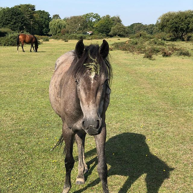 Should I stay or should I go? Have made three transatlantic flight in 13 days and I'm supposed to head to Canada on Friday. Sort of think I'd rather stay home and just enjoy autumn in the New Forest with the silly ponies. Should I stay or should I go now?