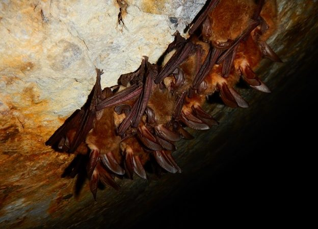 bat-cave-2-624x450.jpg