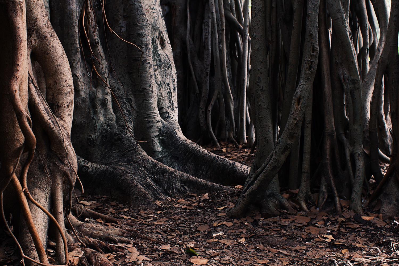 RachelPosner_Header_About_Roots.jpg