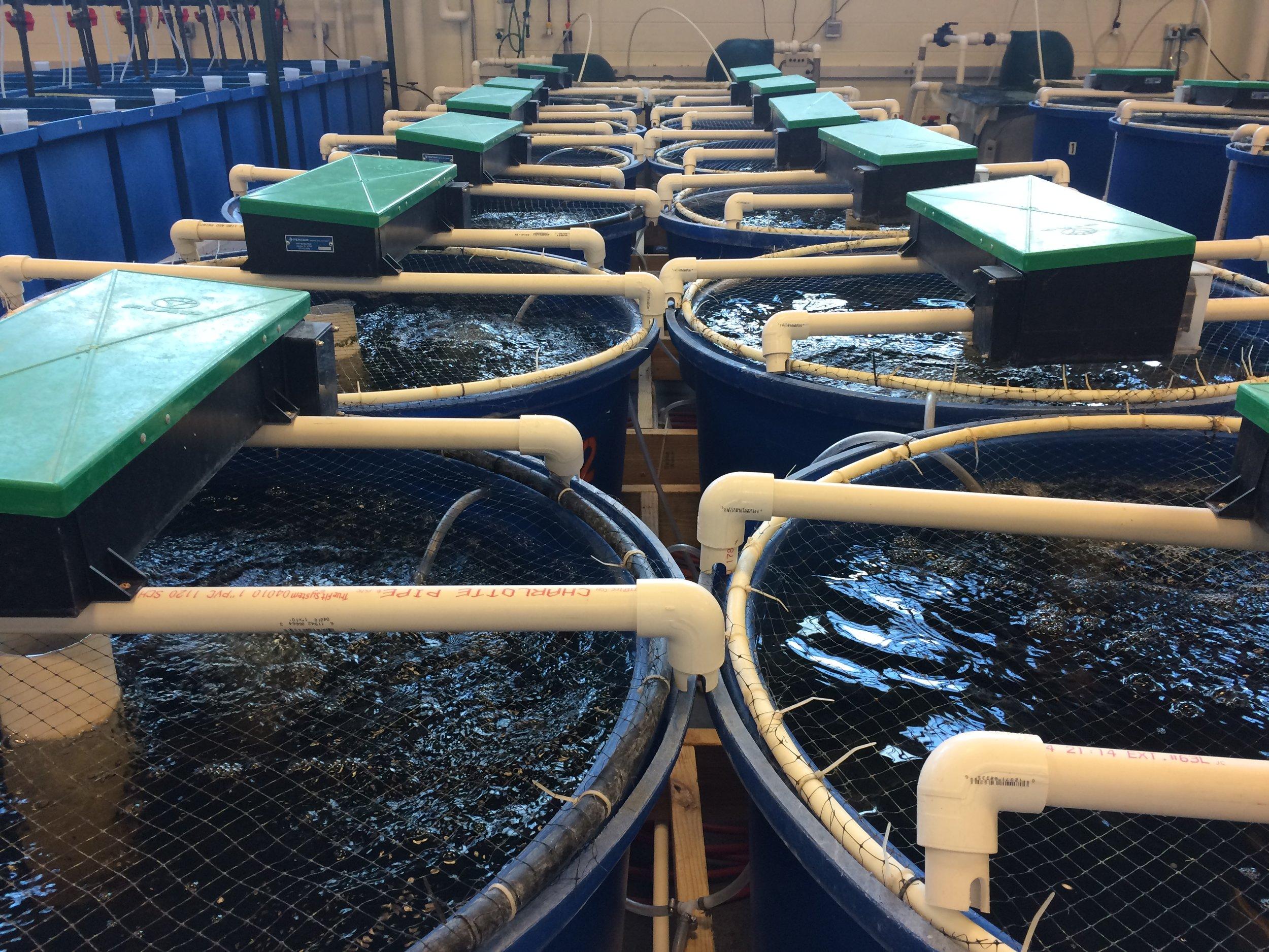 Example of a Recirculating Aquaculture System. Credit  Narek75/Wikimedia (CC BY-SA 4.0)