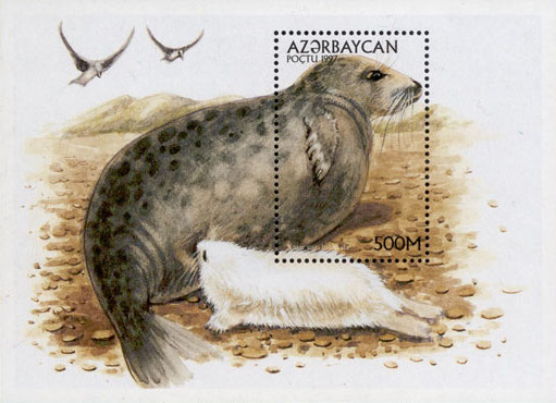 A stamp of Azerbaijan showing a Caspian seal and pup. Credit  Post of Azerbaijan/Wikimedia  (not subject to copyright)