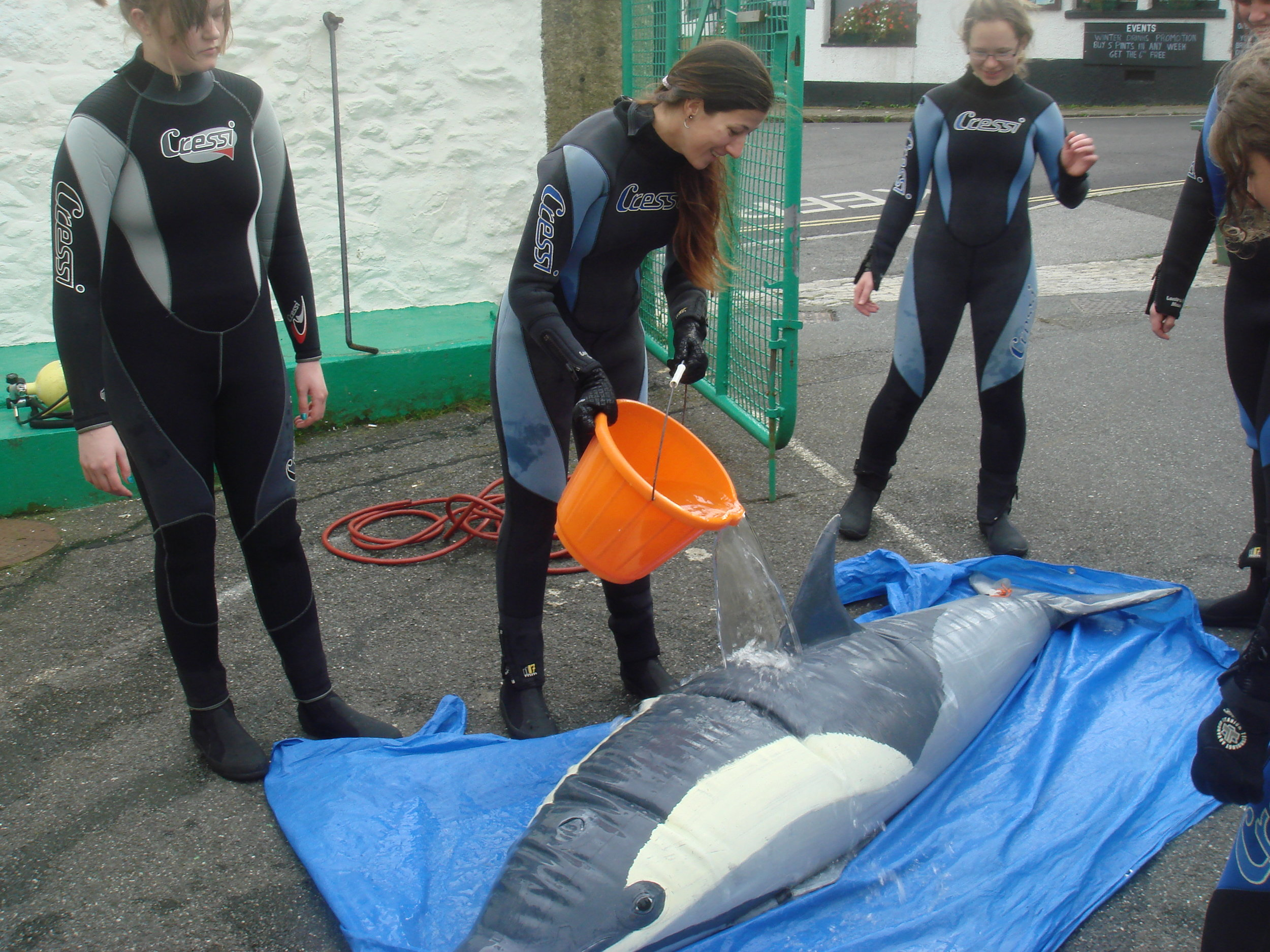 Bubbles the dolphin helping us with our stranded whale and dolphin rescue training.