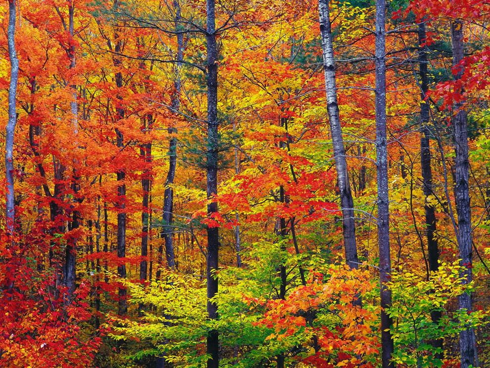 bright-fall-foliage-autumn-in-new-hampshire