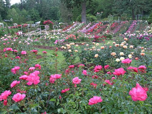 Jane-Inch-Portlandish-Rose-Garden-2.jpg