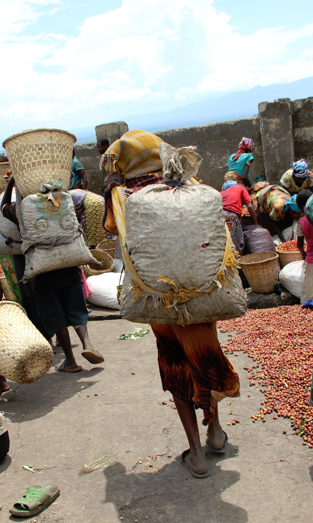 Coffee cherries are brought to the washing stations by coffee producers, predominately women who carry large heavy sacks on their backs, often for considerable distances.