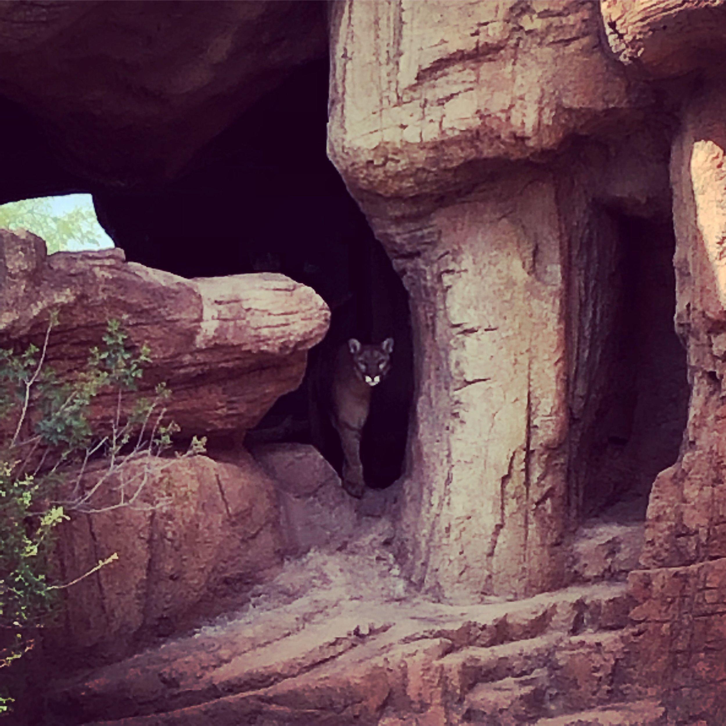 Arizona-Sonora-Desert-Museum.jpg