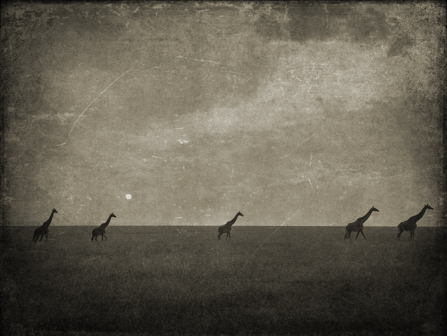 Five Giraffes with Moon copy.jpg