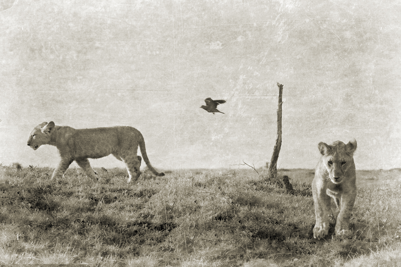 LION CUBS WITH BIRD.jpg