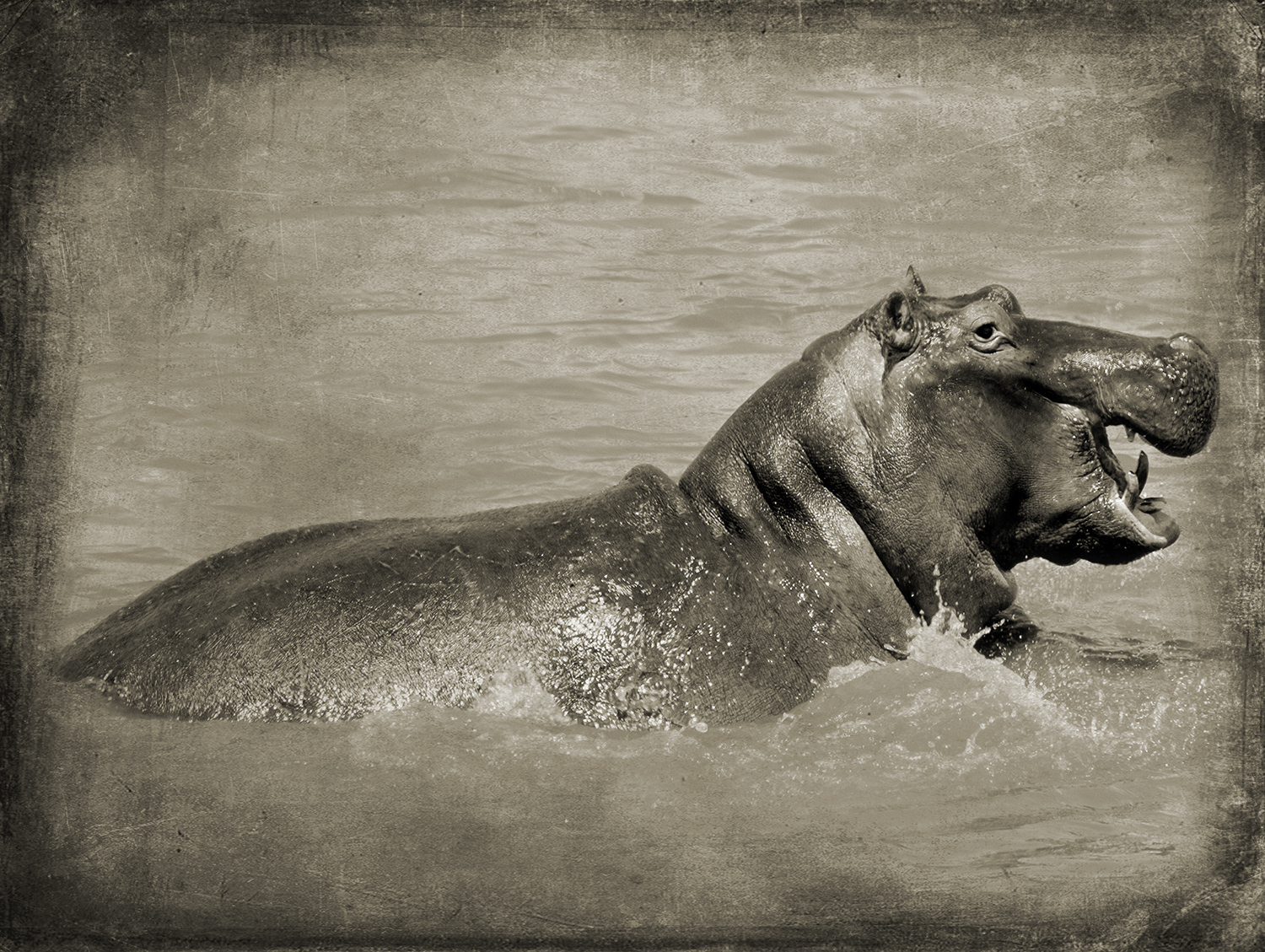 PEC_Toothed Hippo_9945 copy.jpg