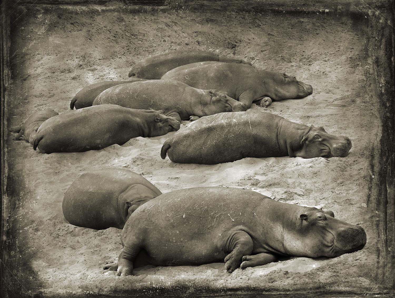 PEC_Beached Hippos_1459 copy.jpg