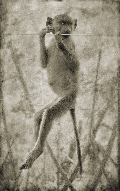Monkey 1Wrkng.jpg