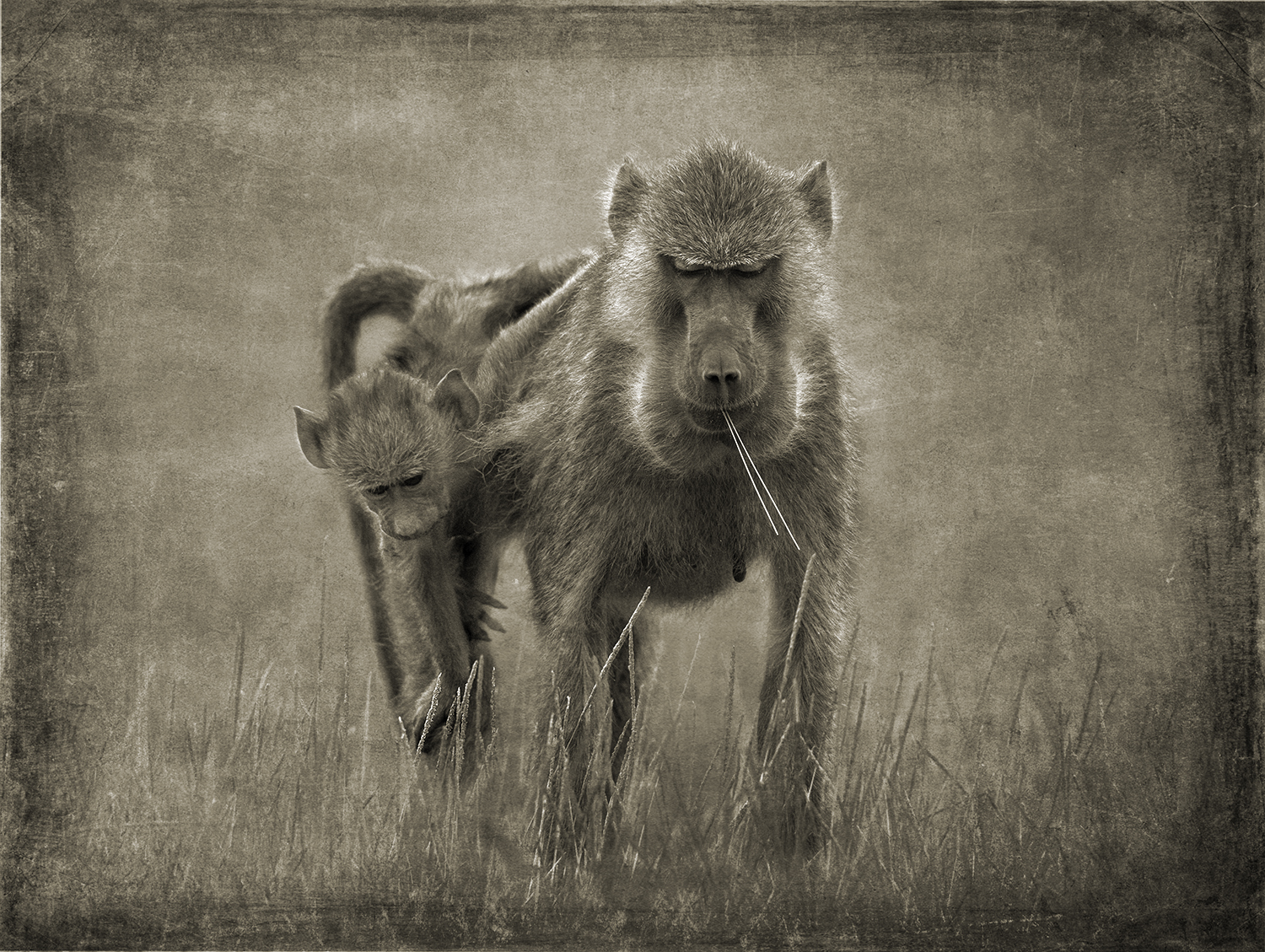 Baboon Mother with Child  copy.jpg
