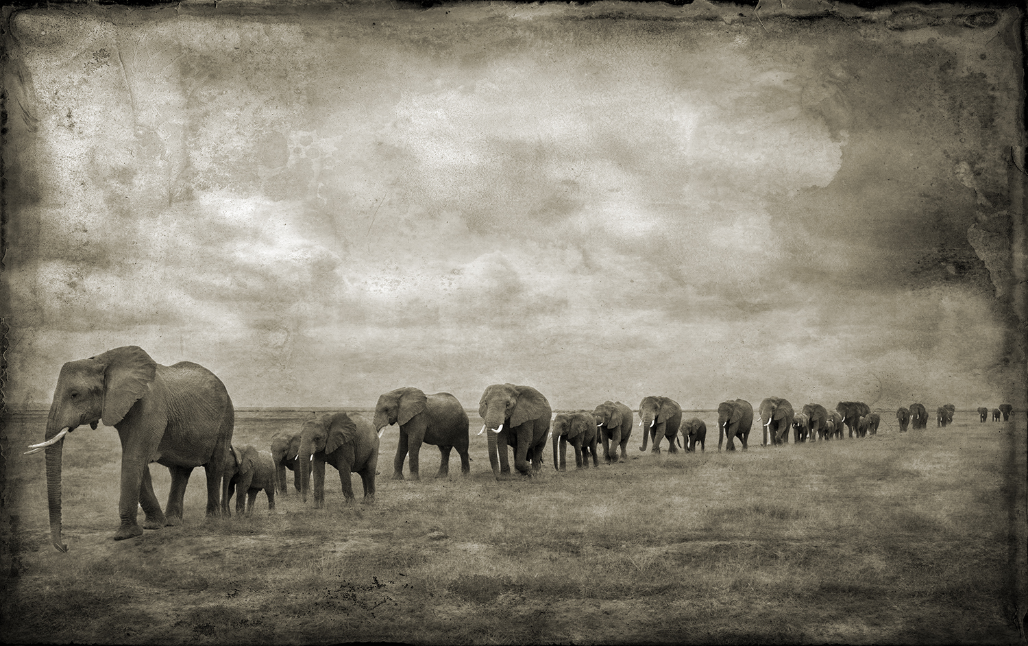 Line of Elephants Amboselli copy.jpg