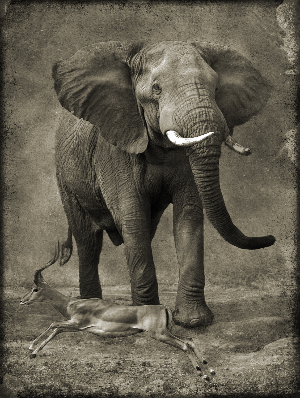 PEC_Impala with Elephant_6028 copy.jpg