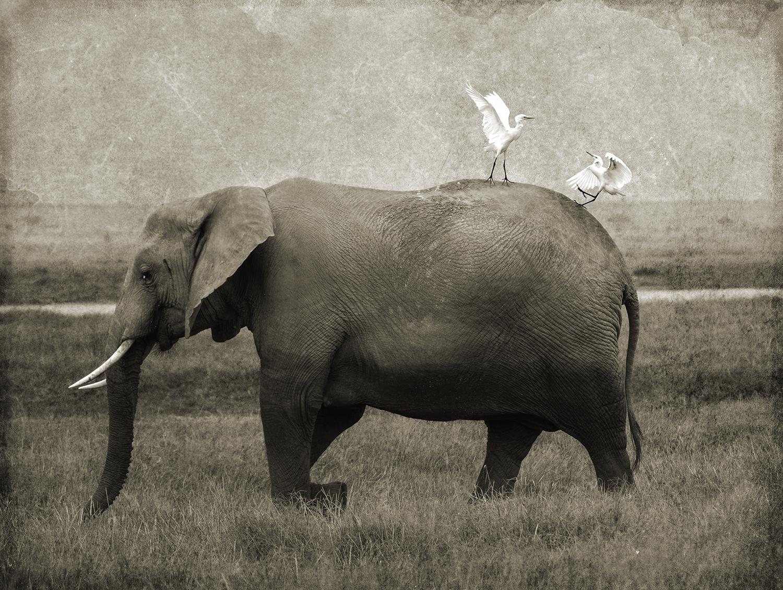 PEC_Two BIrds on Elephant_5161 copy.jpg