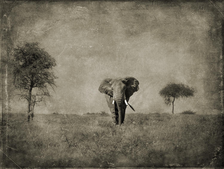 Centered Elephant.jpg