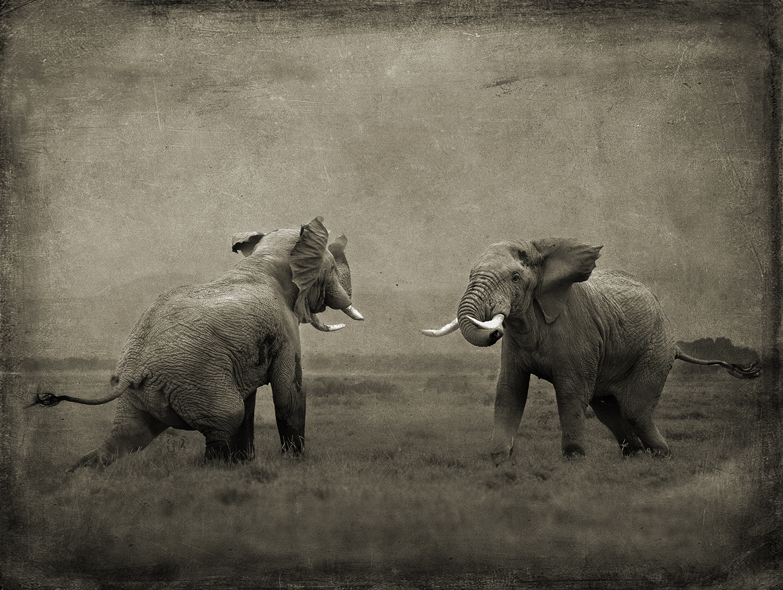 Elephant Challenge copy.jpg