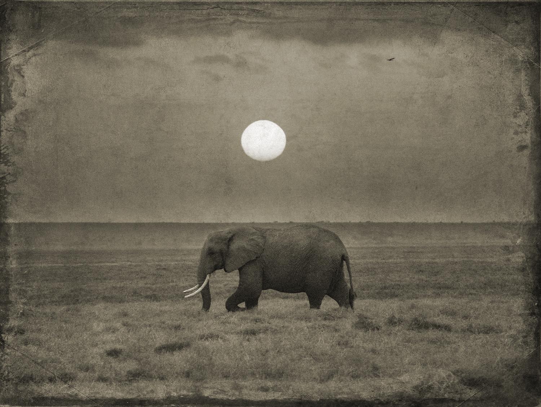 Elephant with Sun and Bird copy.jpg