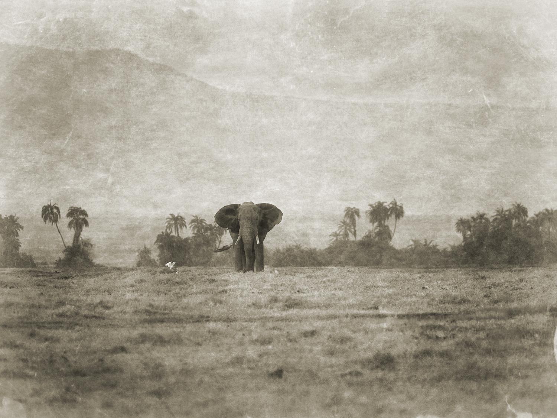 DISTANT ELEPHANT.jpg