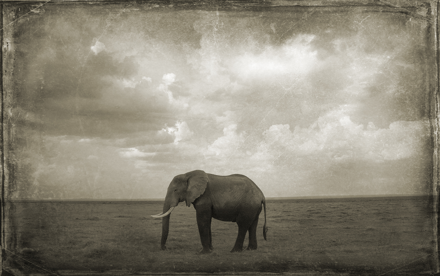 Lone Elephant on Plains.jpg