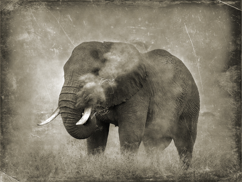 PEC_Elephant in Dust_7374 Flat copy.jpg