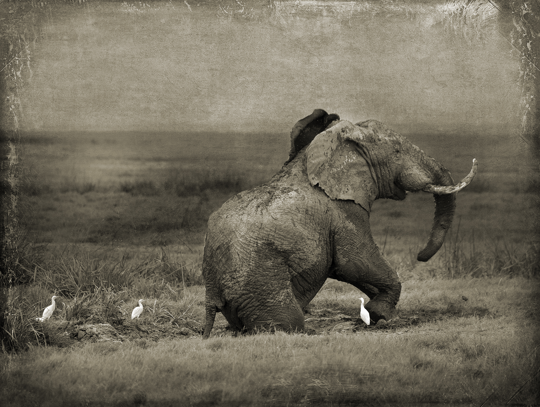 PEC_Elephant in the Mud_6826 copy.jpg