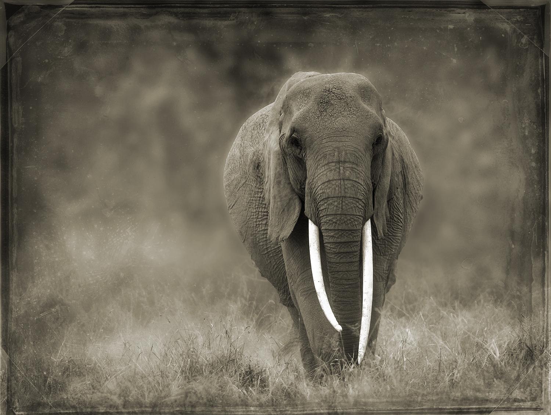 PEC_Peaceful Elephant_5954 copy.jpg