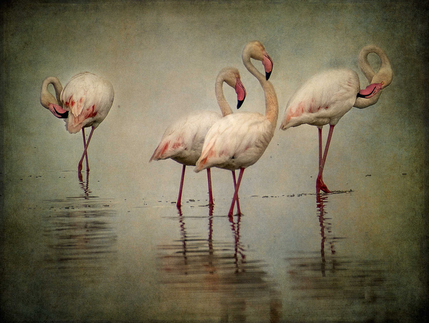 Four Flamingos copy.jpg