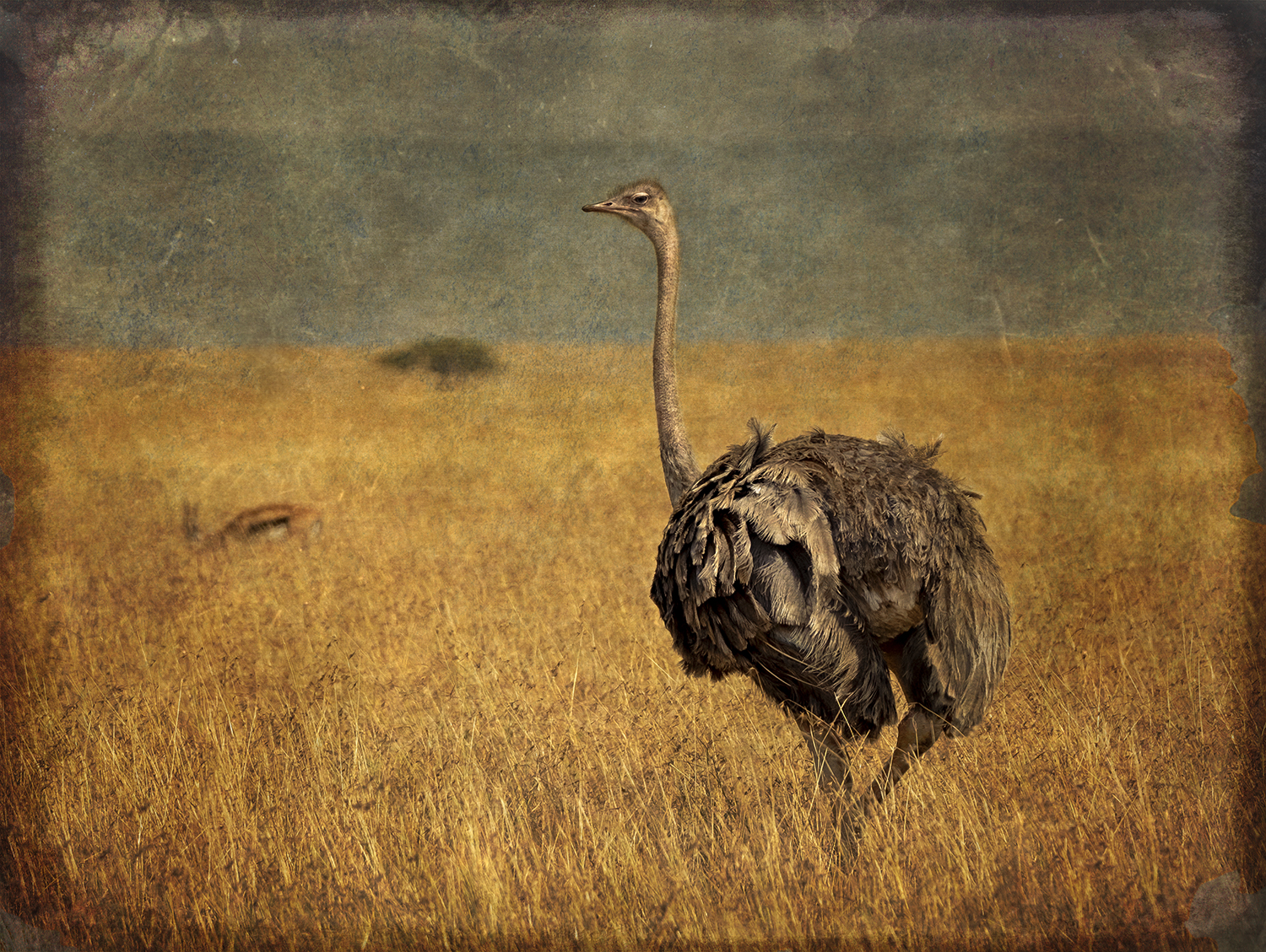 PEC_Ostrich wWith Antelope_9893 copy.jpg