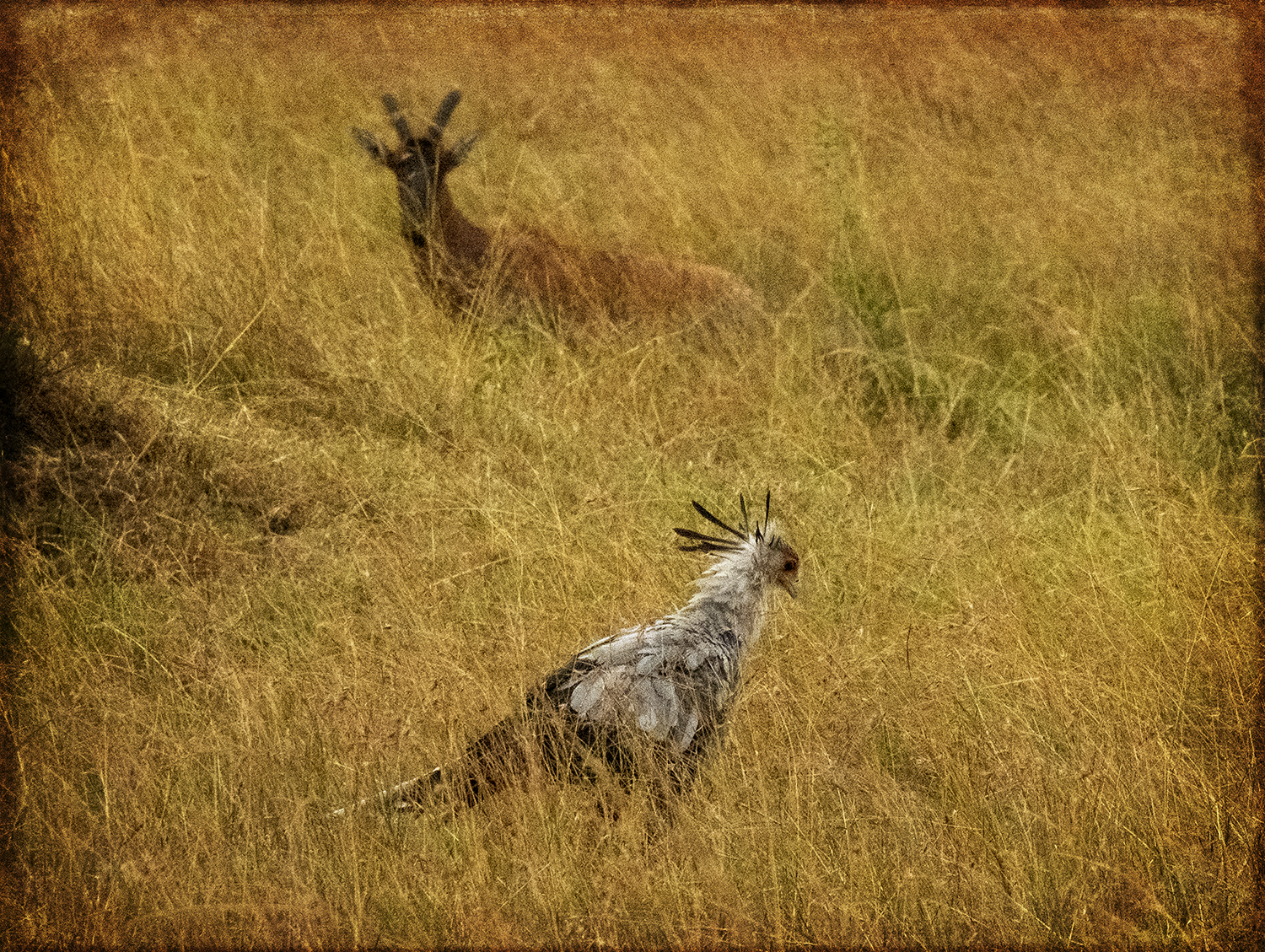 Secretary Bird and Antelope_C_0348 copy.jpg