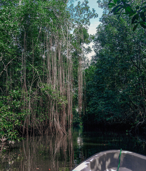 parc des mangroves 2.jpg