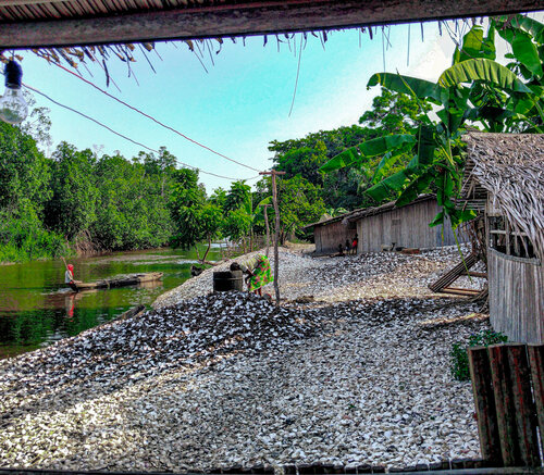 parc des mangroves 4.jpg