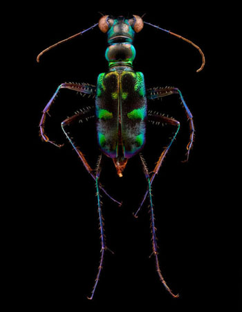Weekly-Roundup-24-Daily-Tay-PetaPixel-Levon-Biss-Microsculpture-Insects.jpg