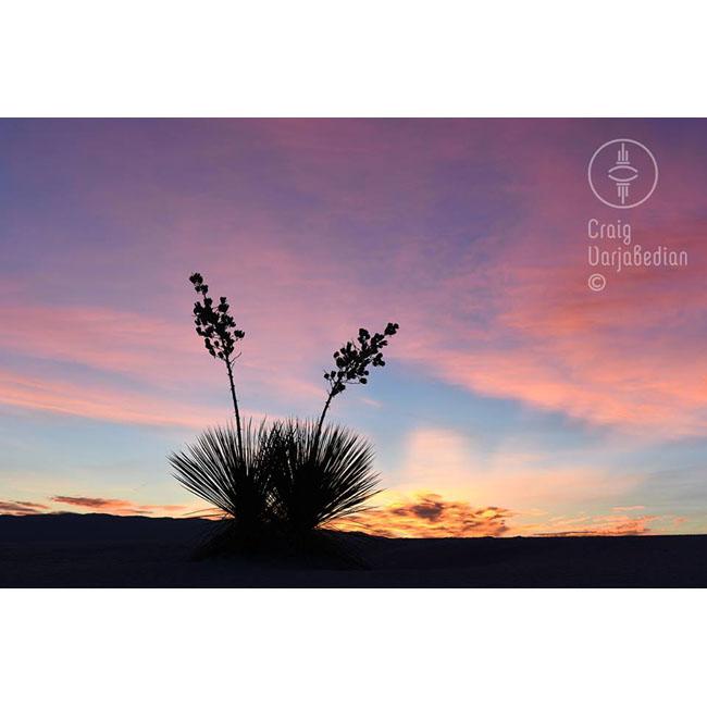 Yuccas-Sunrise-White Sands National Monument-©Craig Varjabedian.jpg