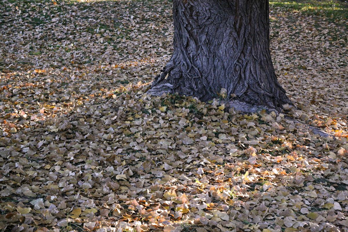 leaves-Cindy copy.jpg