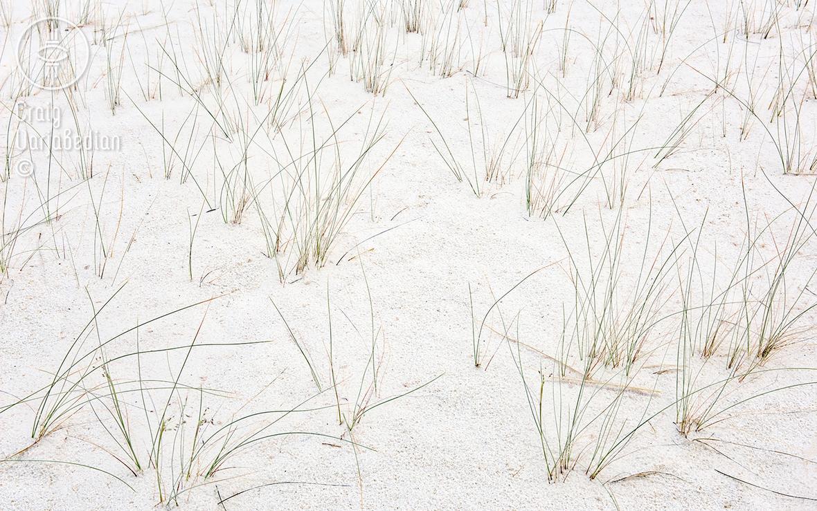 Indian_Rice_Grass-DSC_9506-FB.jpg