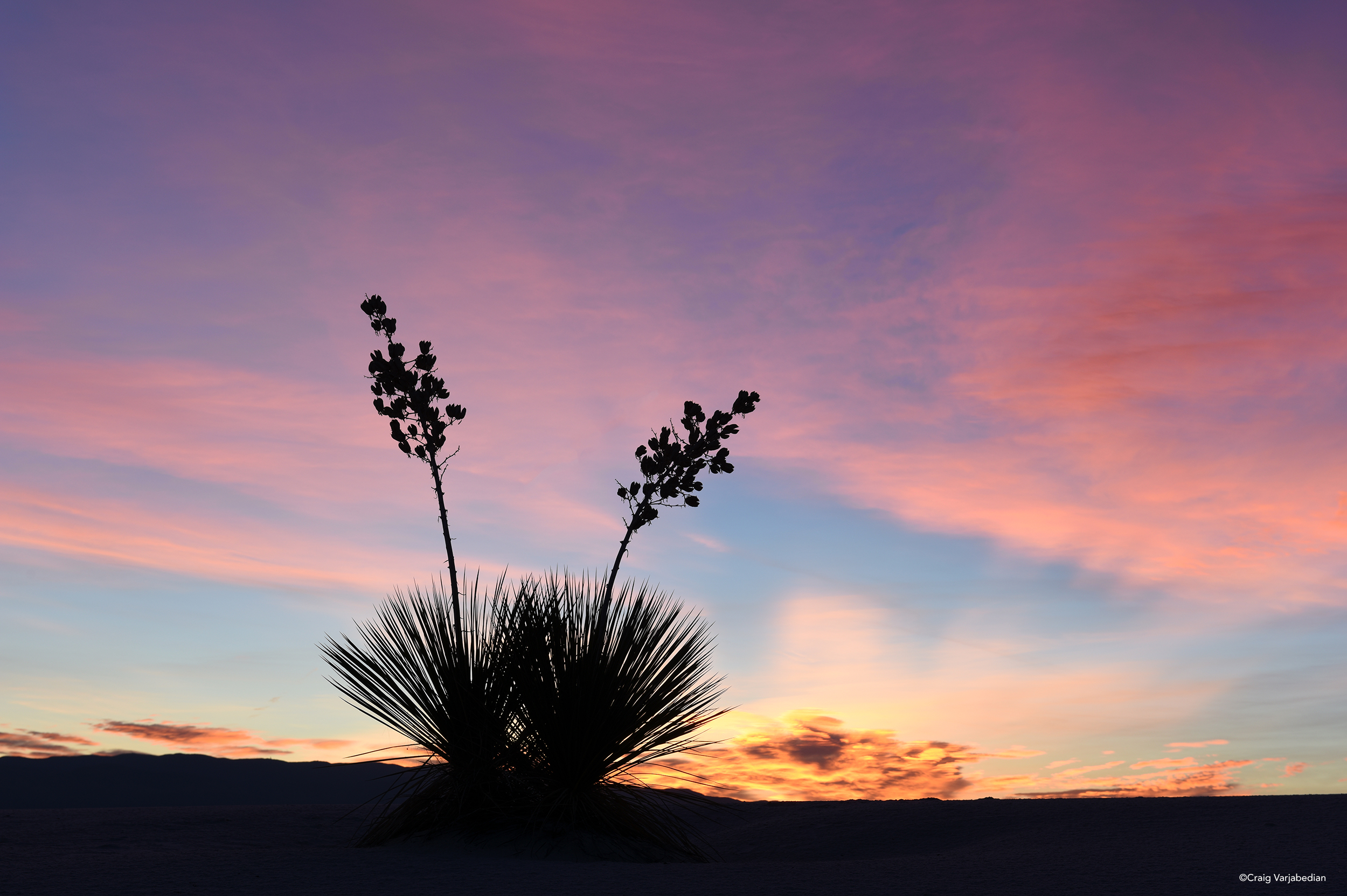 Yucca Sunrise-Varjabedian.jpg