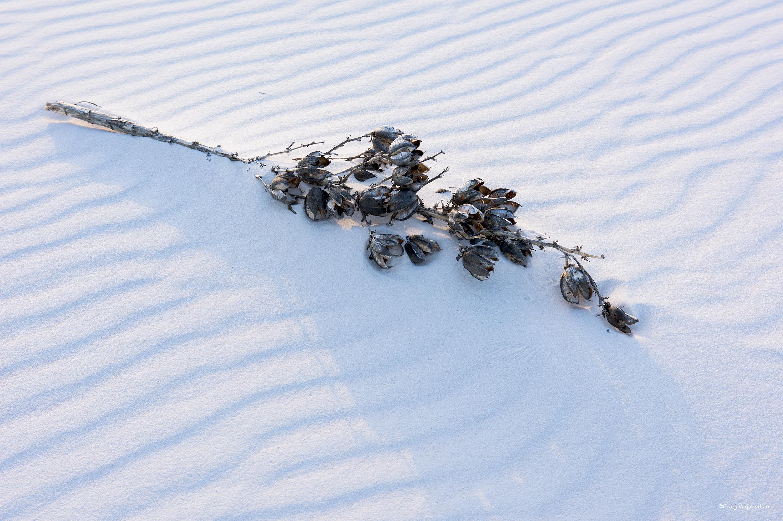 Yucca Seed Pods & Sand.jpg