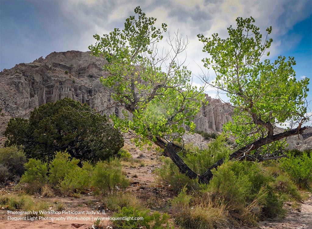 Cliffs-trees-JudyB.jpg